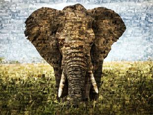 elefante su foto mosaico